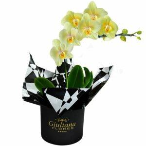 Flores Para Amiga: Orquídeas