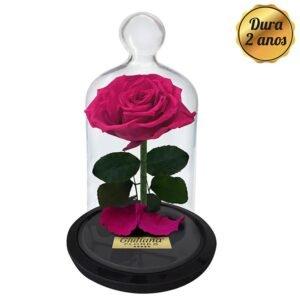 Flores Para Amiga: Rosas Encantadas