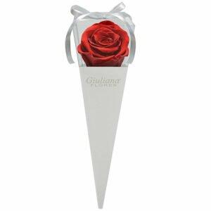 Descubra o que Significa Sonhar com Rosas Vermelhas