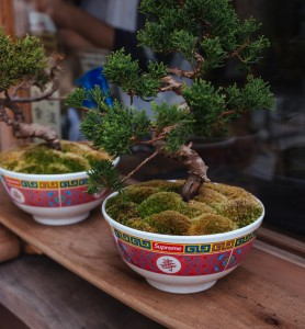 Saiba como cuidar de bonsai