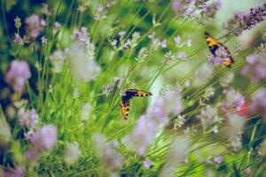 filmes sobre flores