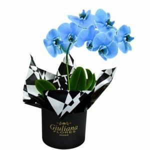 Glamurosas Orquídeas Azuis