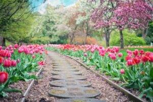 Como Montar Um Jardim com Pedras em Destaque