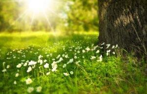 Jardinagem: entenda o que o sol faz com as flores