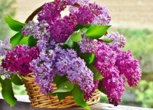 vaso com flores de violeta