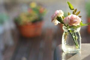flor de cravo no vaso