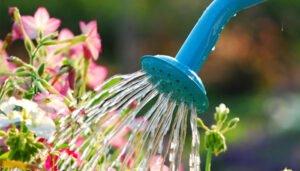 como-regar-flores-rega