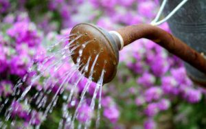 como-regar-flores-regador