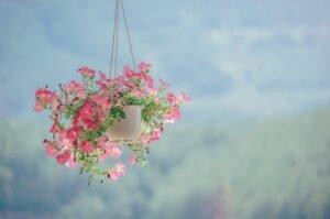 Decoração de Verão - Aposte em flores suspensas