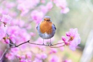 Aprenda como atrair beija flor para o seu jardim