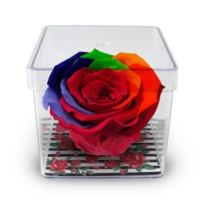 Rosa Encantada Arco-Íris no Acrílico