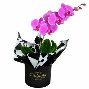 Glamurosas Orquideas Pink