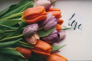 Tulipas no Vaso — Significados dessa Flor Rara!