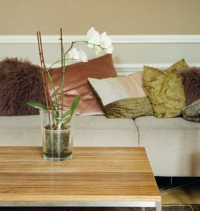 Cultivo de Orquídeas em Apartamentos — Tudo que Você Precisa Saber!