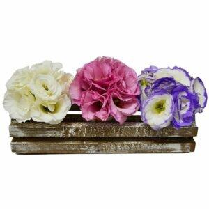 Trio Rustico Flores de Lisianthus
