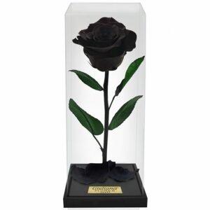 Rosa Encantada Box Preta