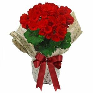 Begônia Vermelha Para Dizer Que Te Adoro