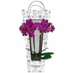 Mini Orquídea Rara lilás na sacola