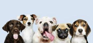 plantas-pet-friendly-cachorros