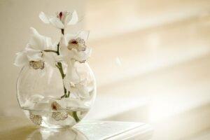 vaso com orquídeas flores para casa
