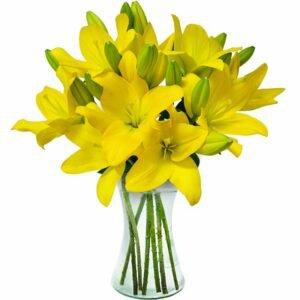 Lindos Lírios Amarelos