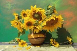 flores de girassol murcha