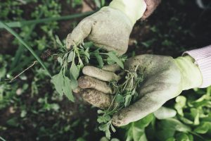 homem segurando plantas dia nacional conservação do solo