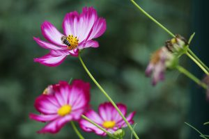 abelha pousando na flor no Dia Mundial da Abelha