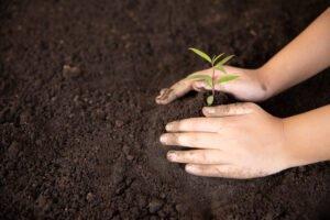 Mão de criança na terra na semana do meio ambiente