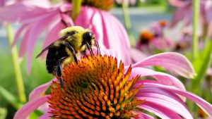 abelha polinizando a flor